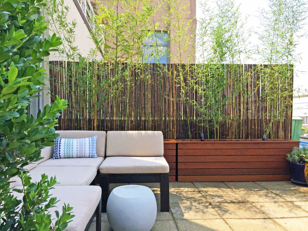 brooklyn backyard bamboo in customer planter boxes