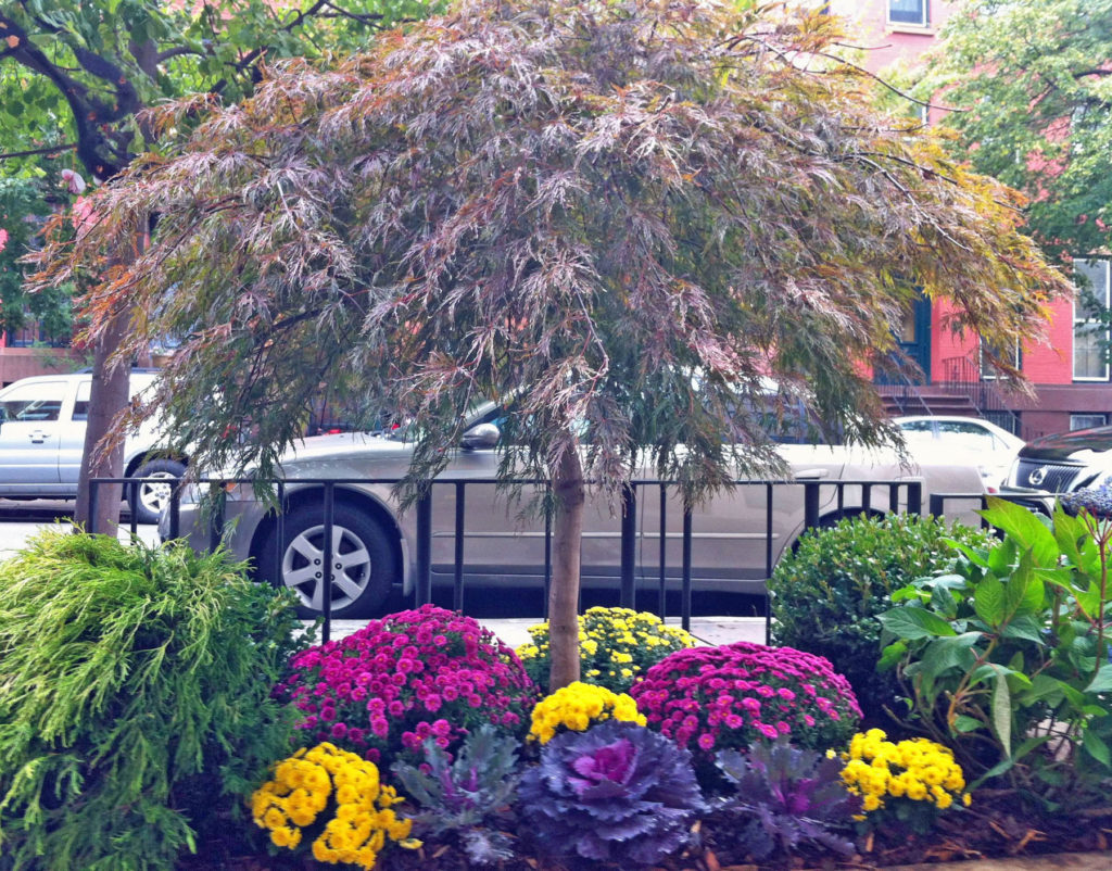 brooklyn fall sidewalk planter nyc garden